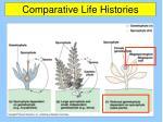 comparative life histories1