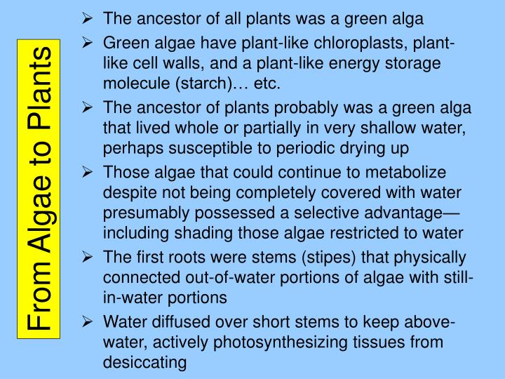 The ancestor of all plants was a green alga