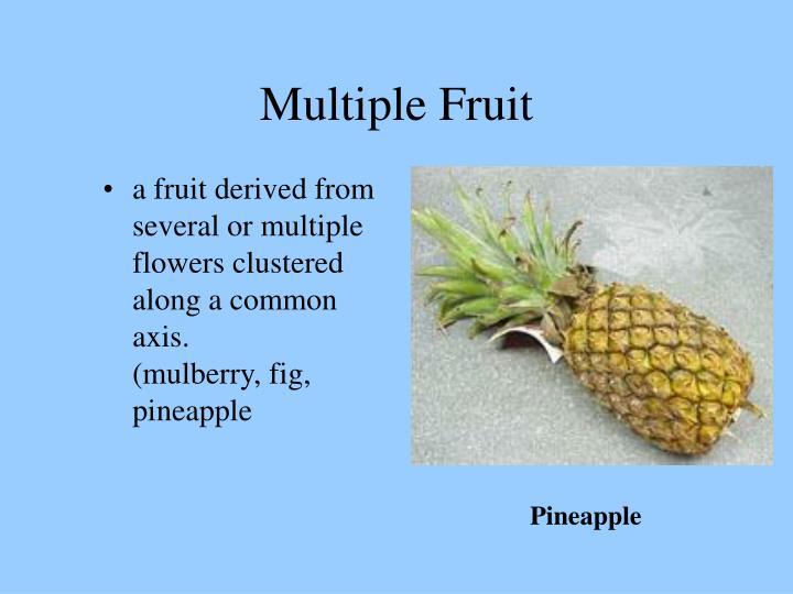 Multiple Fruit