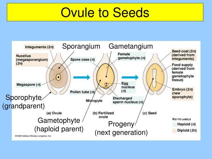 Ovule to Seeds
