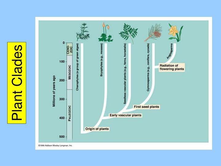 Plant Clades