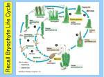 recall bryophyte life cycle