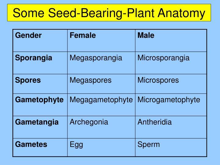 Some Seed-Bearing-Plant Anatomy