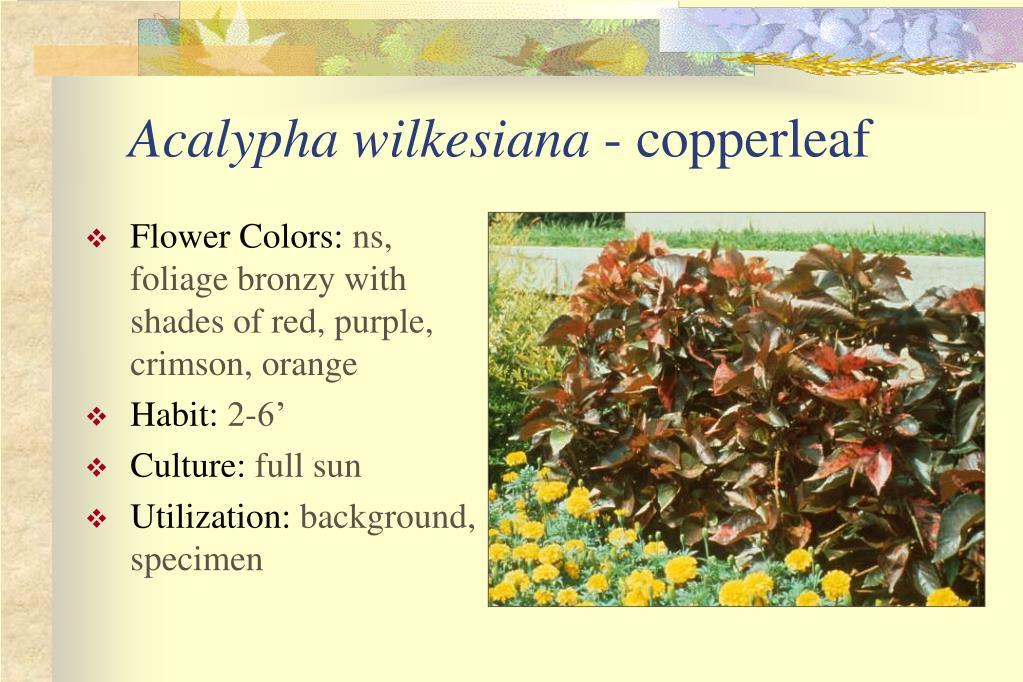 Flower Colors: