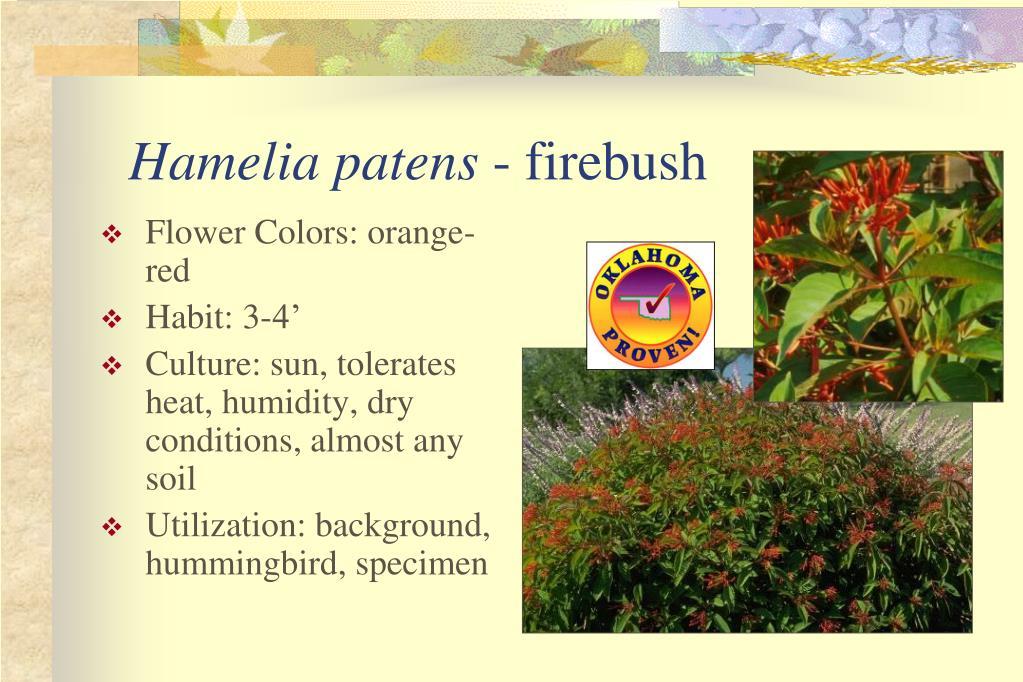 Flower Colors: orange-red