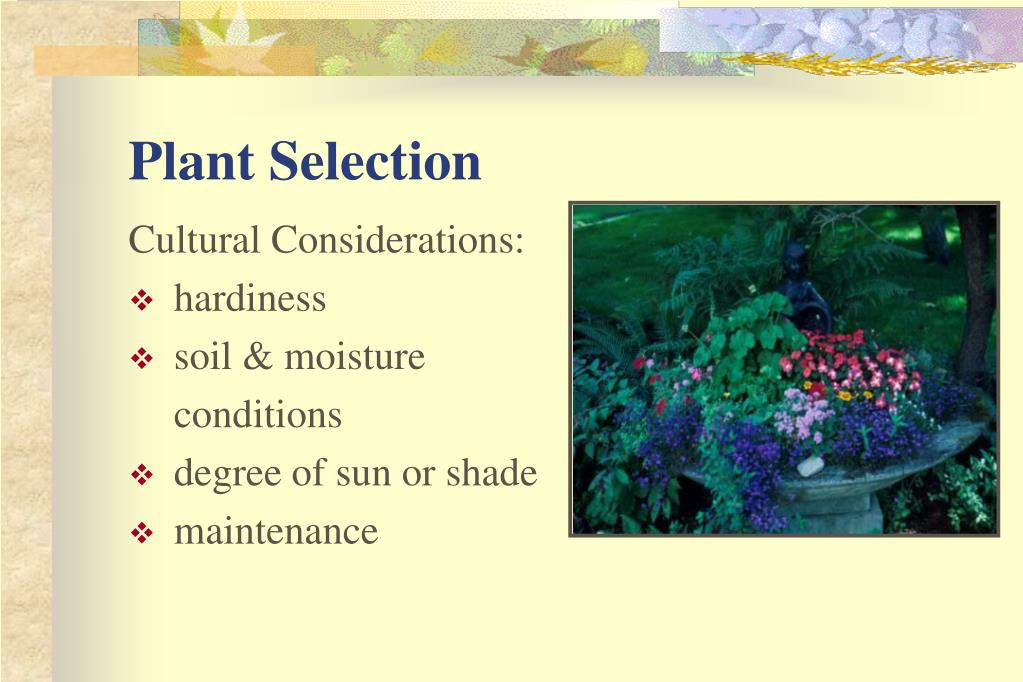 Plant Selection