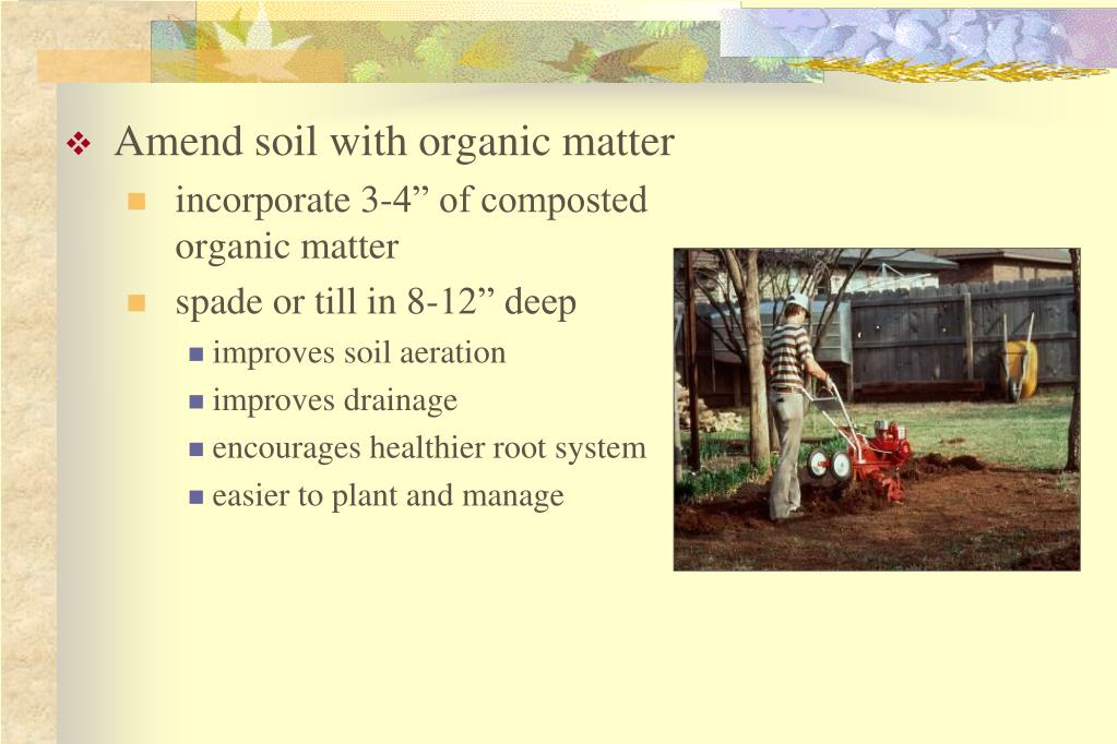 Amend soil with organic matter