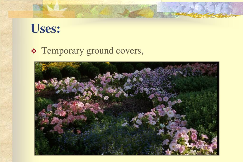 Temporary ground covers,