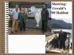 showing gerald s 70 halibut