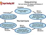 sequencing can you name the stages and phases of cell cycle