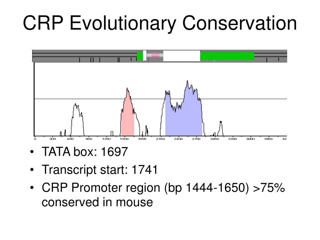 CRP Evolutionary Conservation