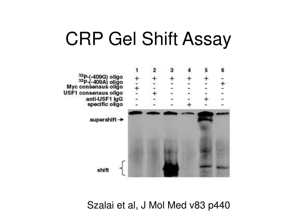 CRP Gel Shift Assay