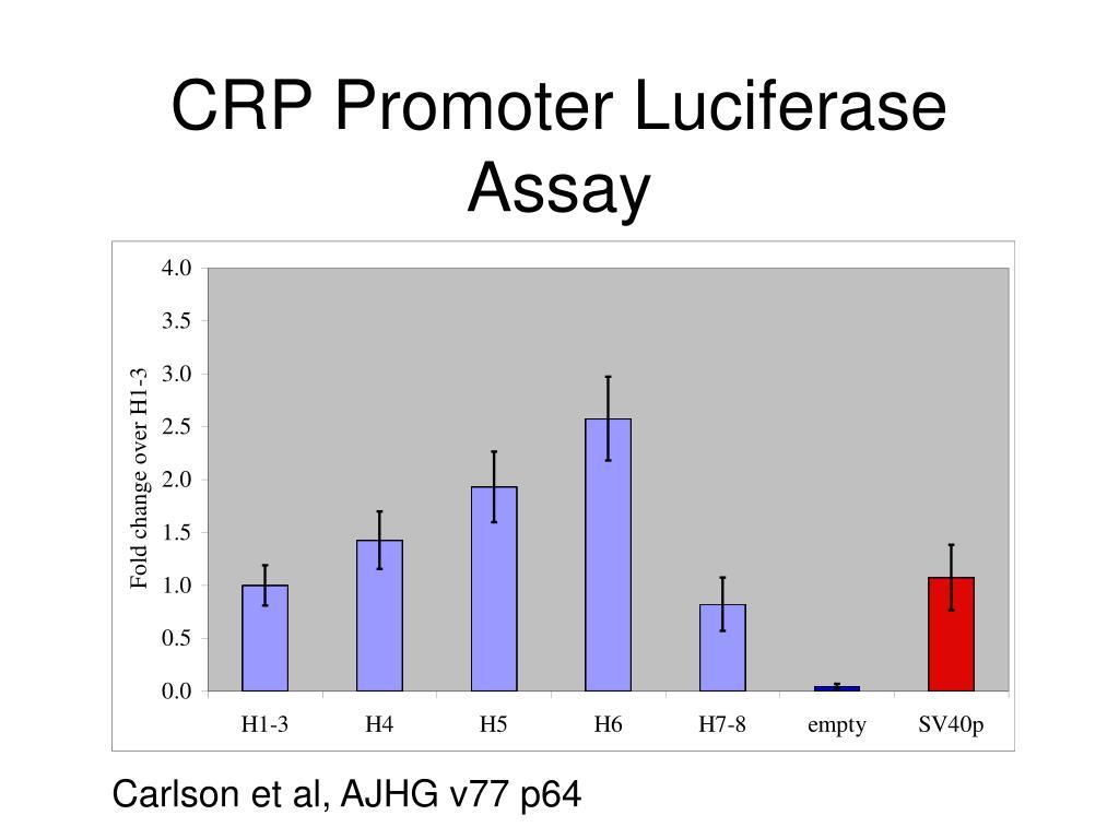 CRP Promoter Luciferase Assay