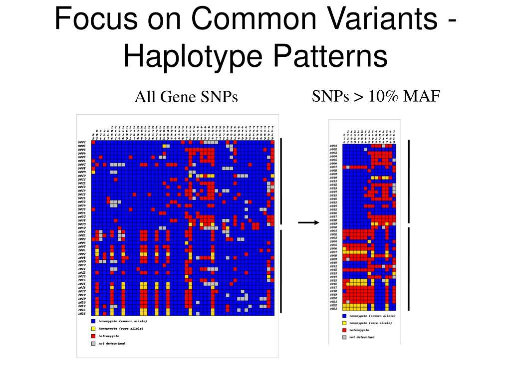 Focus on Common Variants - Haplotype Patterns