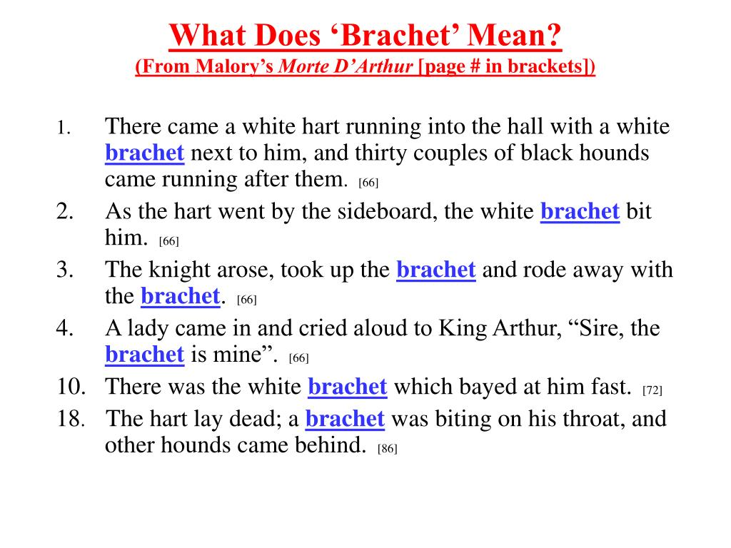 What Does 'Brachet' Mean?