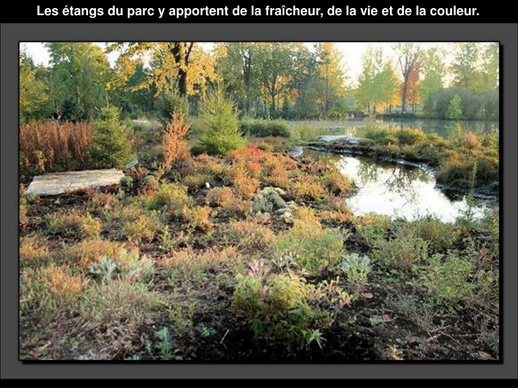 Les étangs du parc yapportent de la fraîcheur, de la vie et de la couleur.