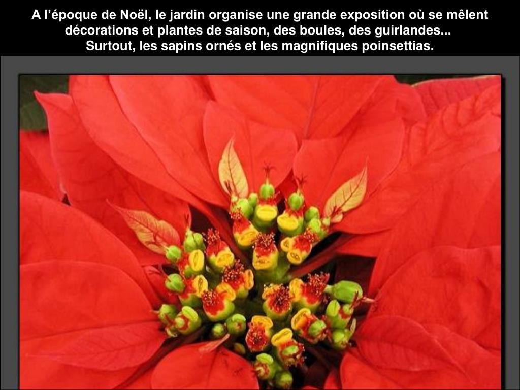 A l'époque de Noël, le jardin organise une grande exposition où se mêlent décorations et plantes de saison, des boules, des guirlandes...
