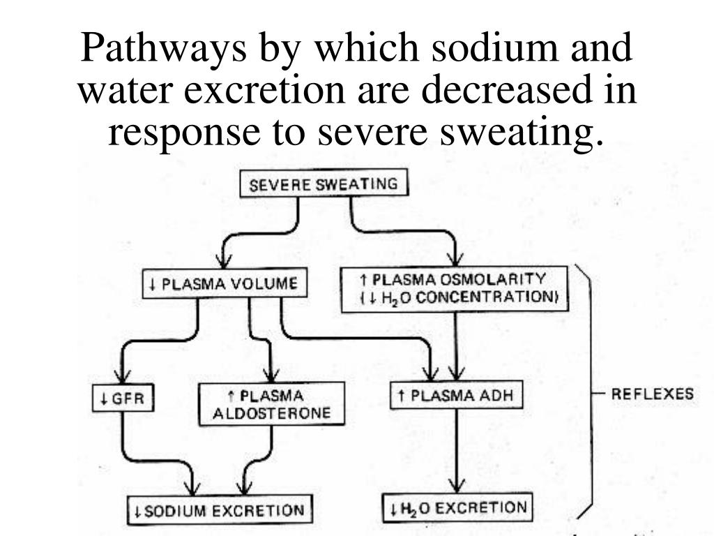 Pathways by which sodium and water excretion are decreased in response to severe sweating.