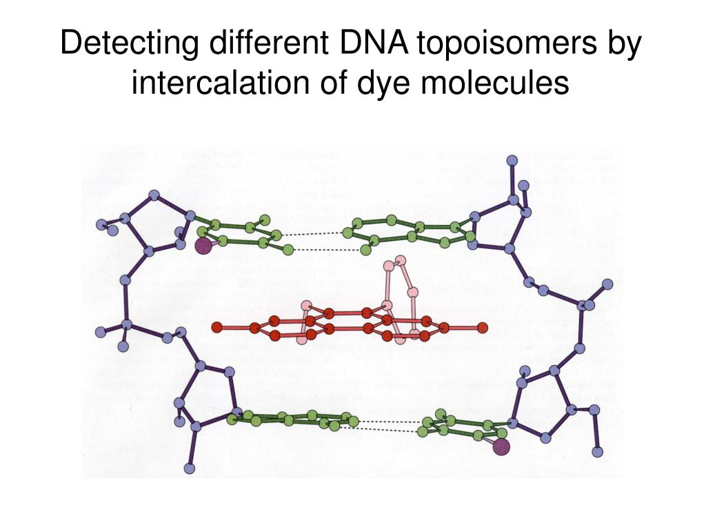 Detecting different DNA topoisomers by intercalation of dye molecules
