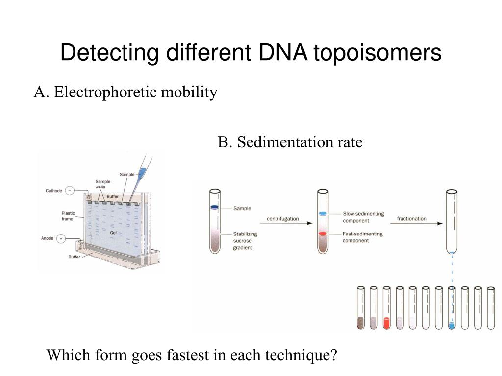 Detecting different DNA topoisomers