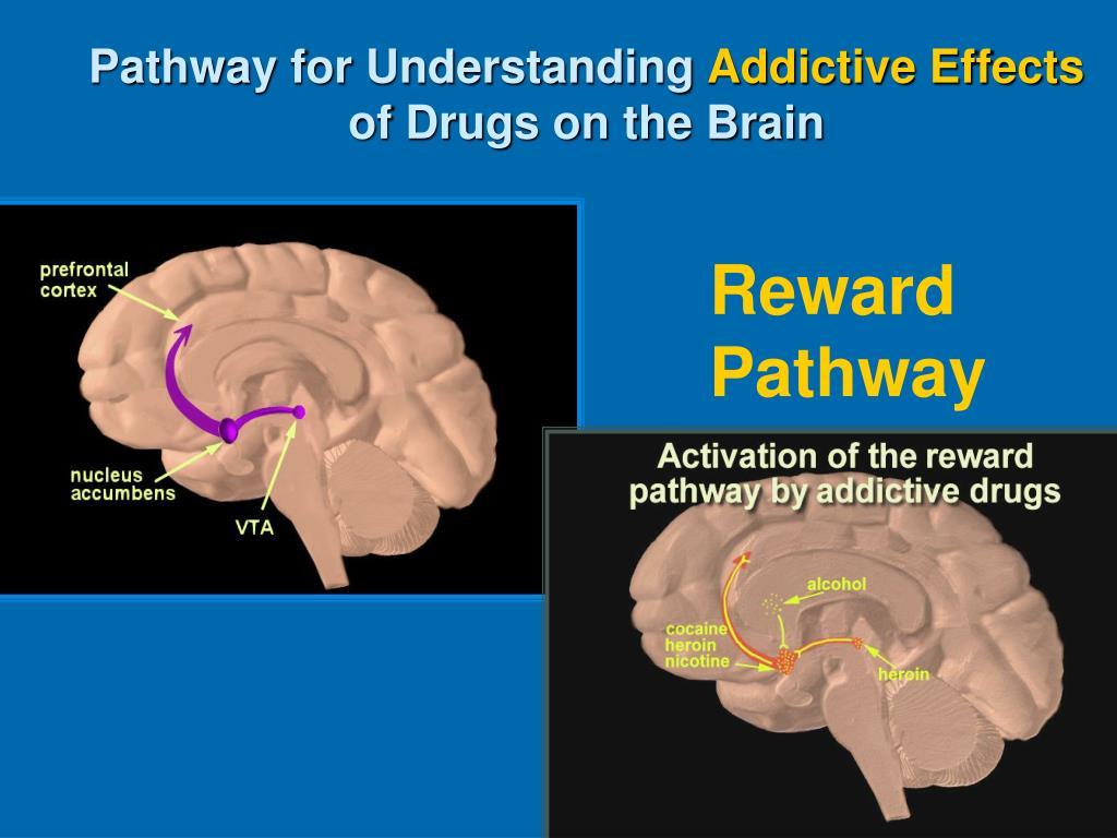 Pathway for Understanding