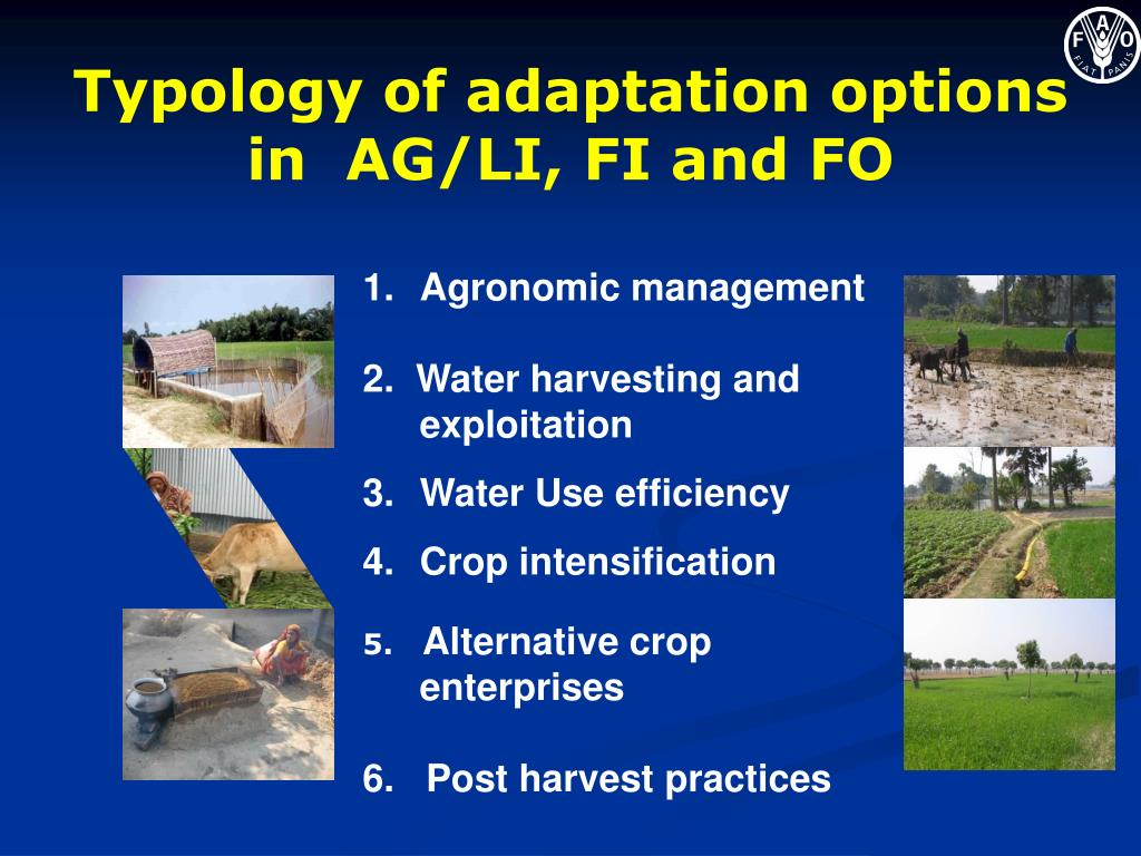 Typology of adaptation options in  AG/LI, FI and FO