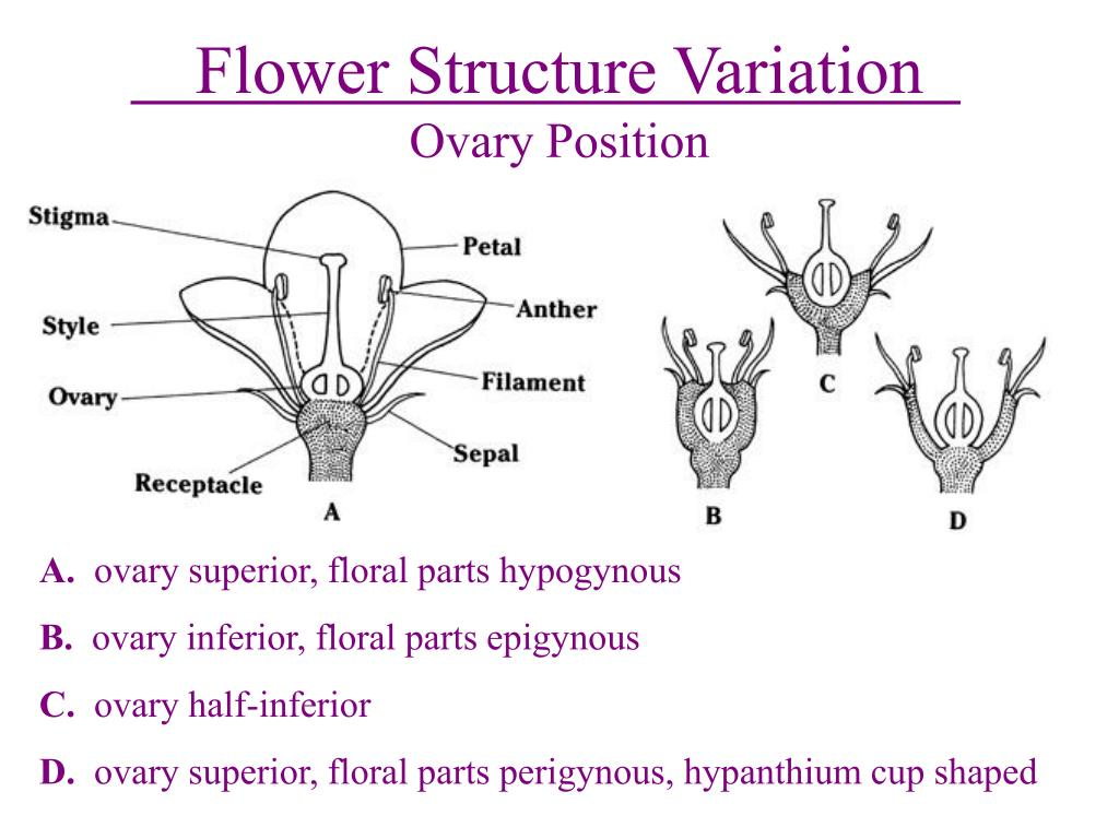 Flower Structure Variation