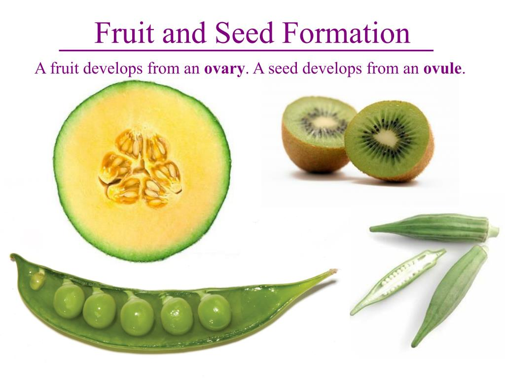 Fruit and Seed Formation