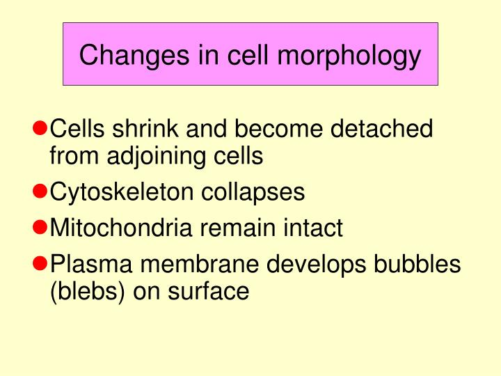 Changes in cell morphology