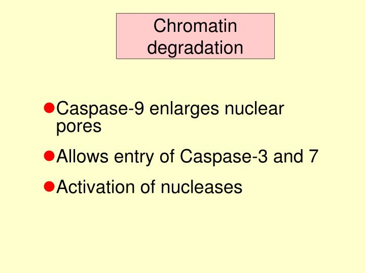 Chromatin degradation