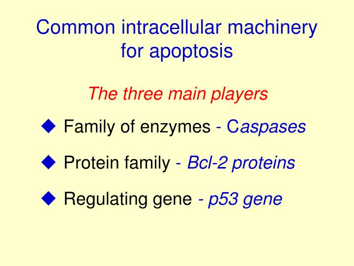 Common intracellular machinery  for apoptosis