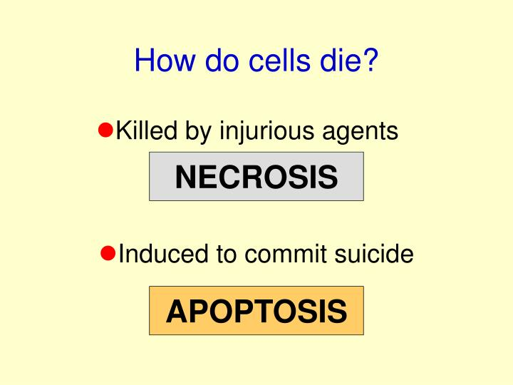 How do cells die?