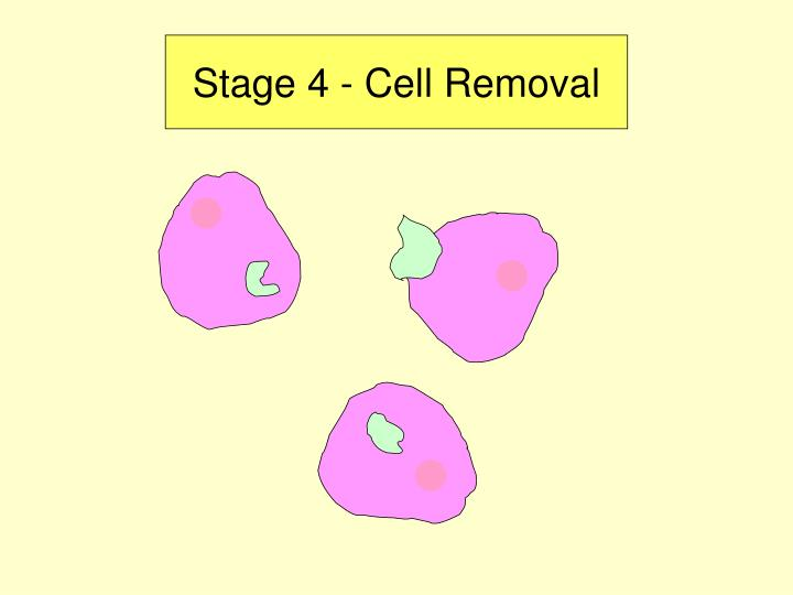 Stage 4 - Cell Removal