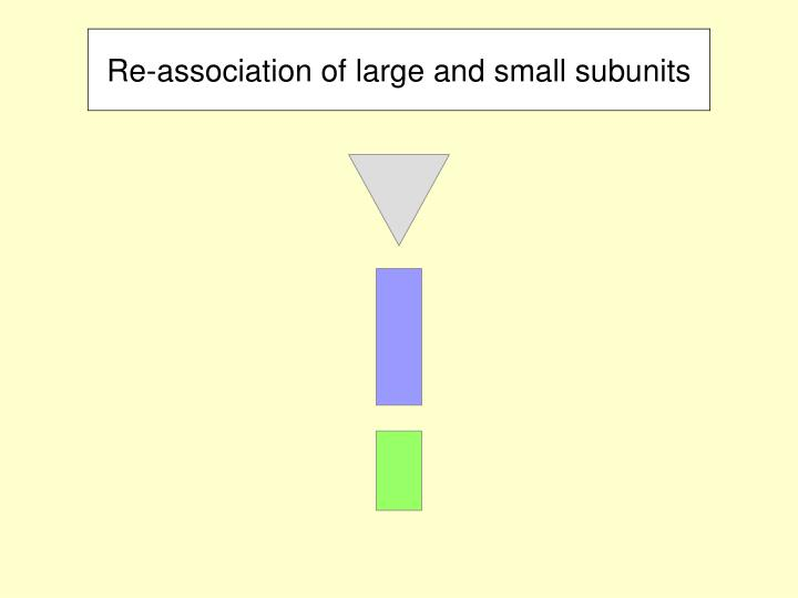 Re-association of large and small subunits