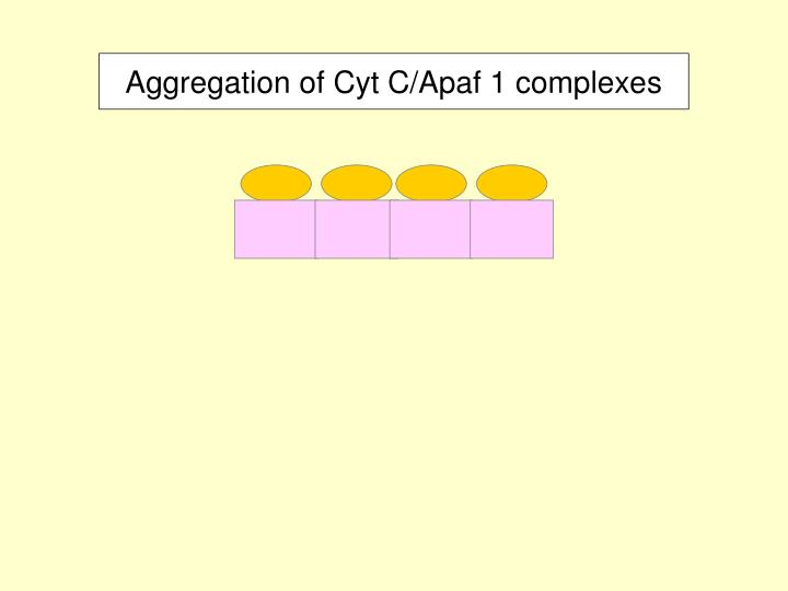Aggregation of Cyt C/Apaf 1 complexes