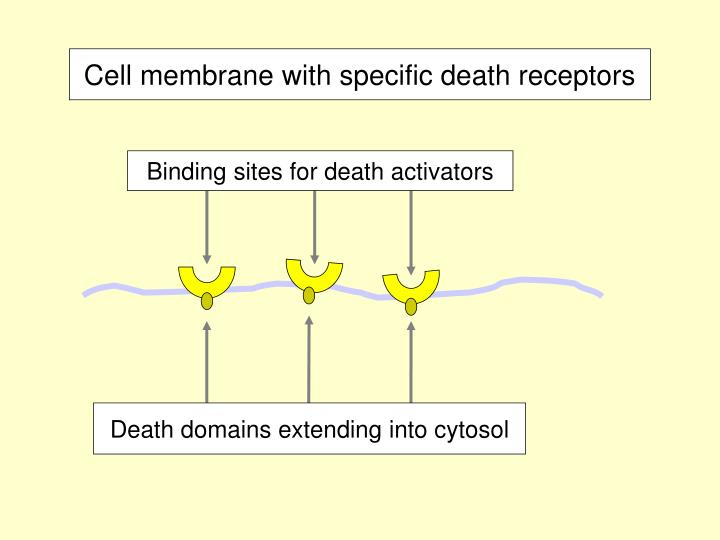 Binding sites for death activators
