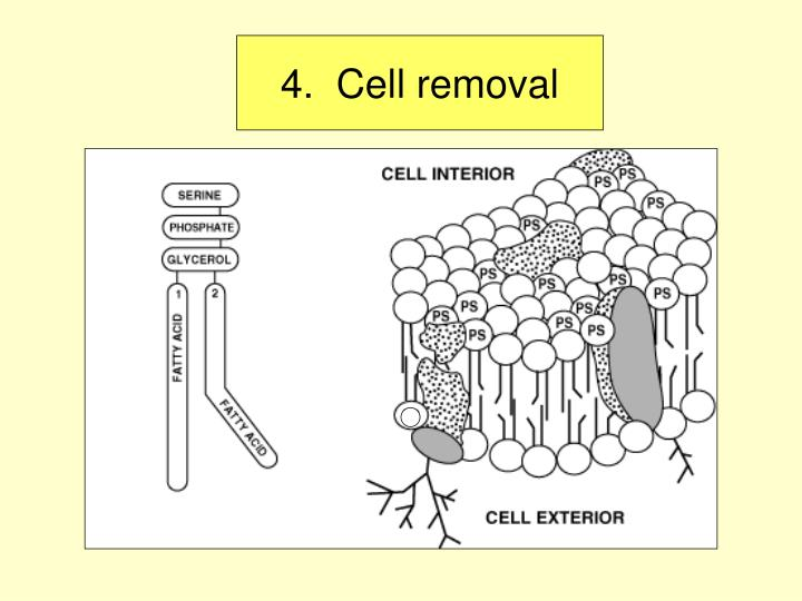 4.  Cell removal