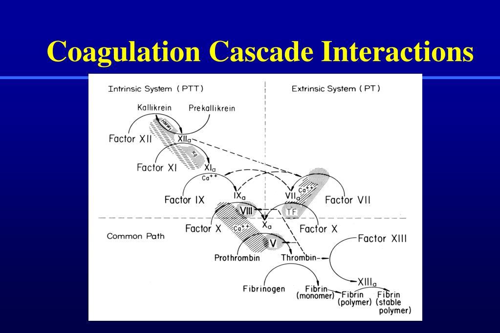 Coagulation Cascade Interactions