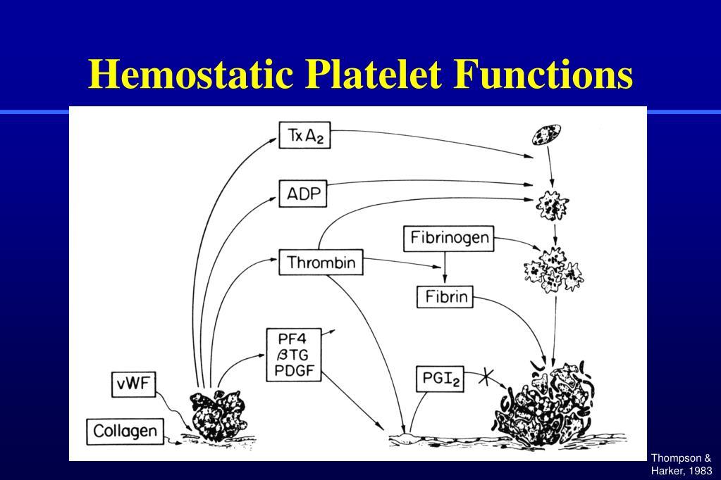 Hemostatic Platelet Functions