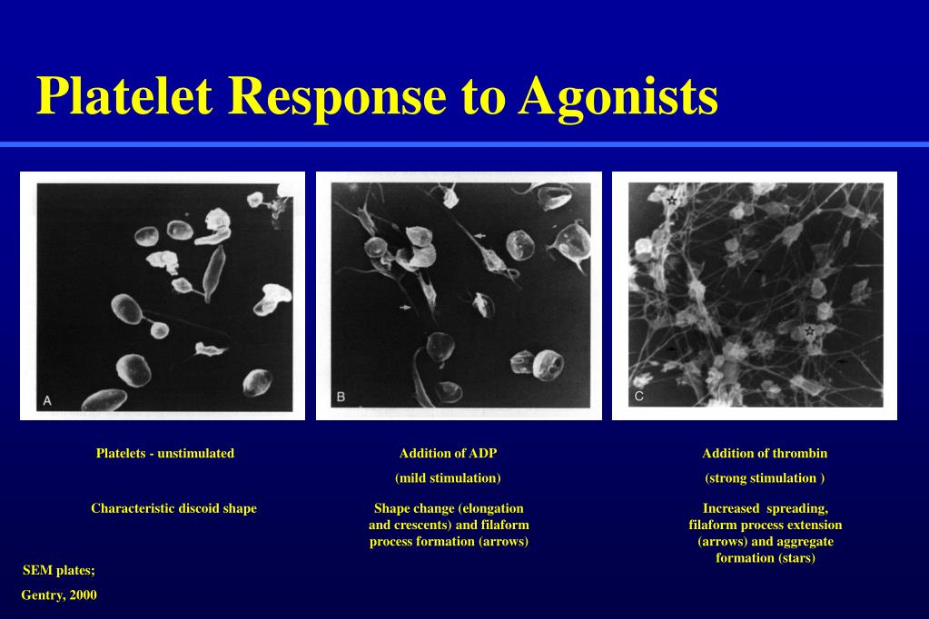 Platelet Response to Agonists