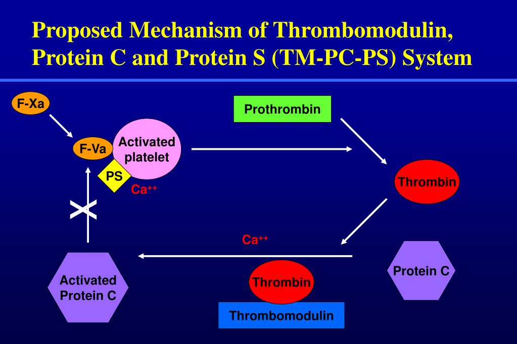 Proposed Mechanism of Thrombomodulin, Protein C and Protein S (TM-PC-PS) System