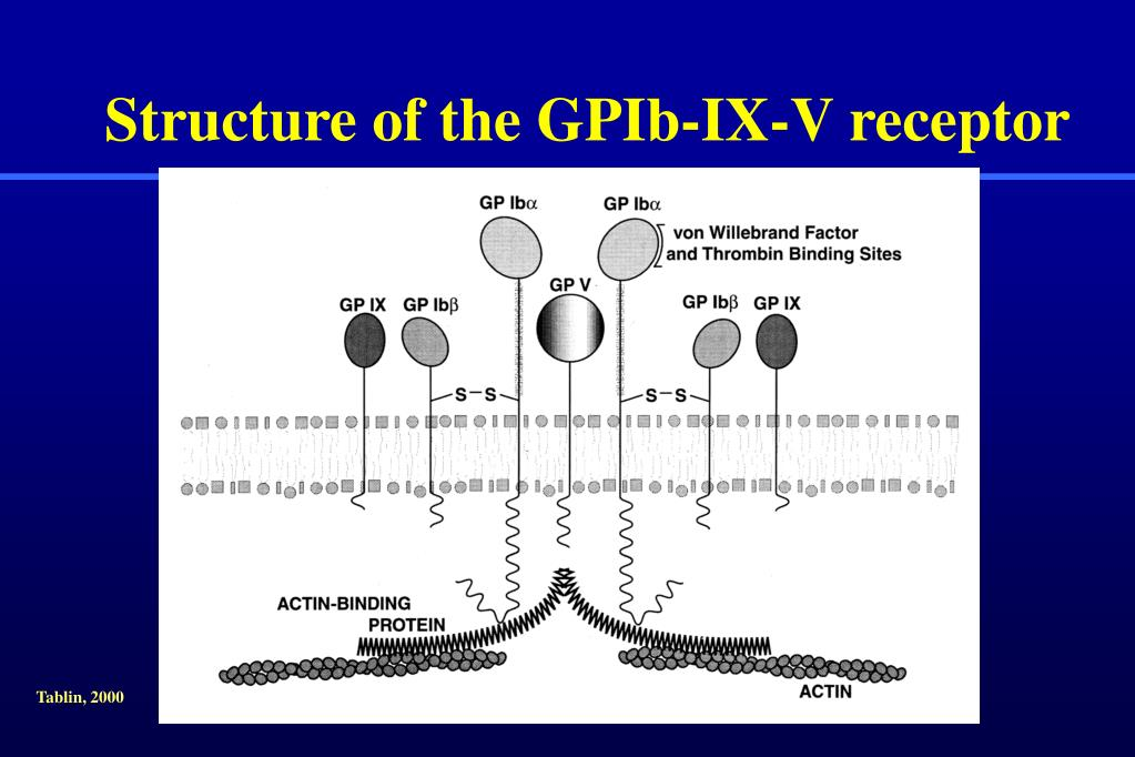 Structure of the GPIb-IX-V receptor