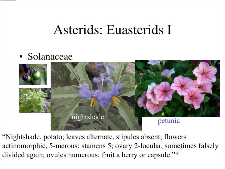 Asterids: Euasterids I