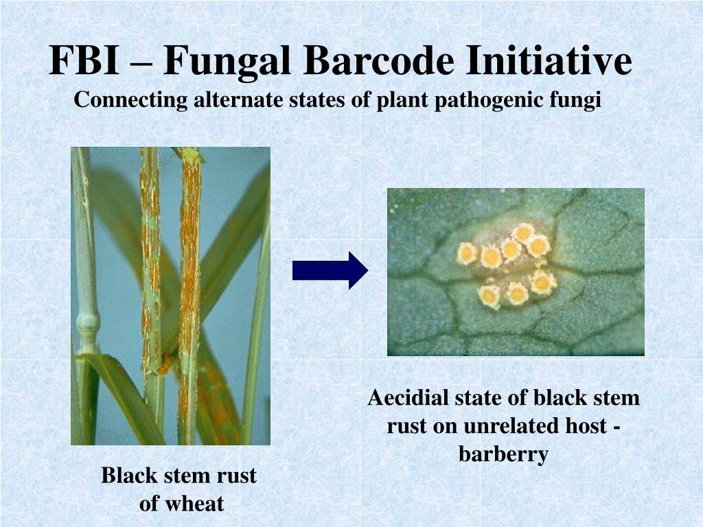 FBI – Fungal Barcode Initiative