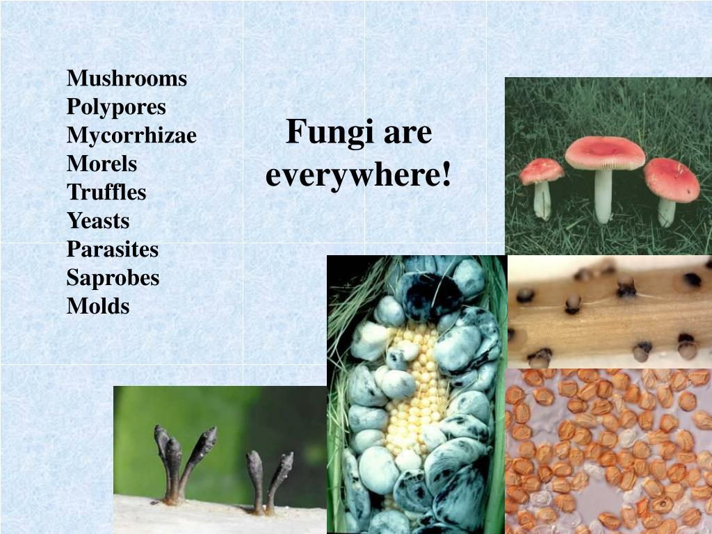 Fungi are everywhere!