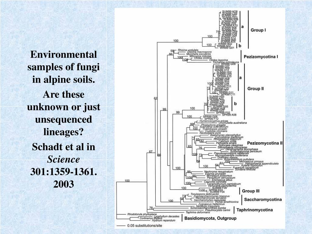 Environmental samples of fungi in alpine soils.