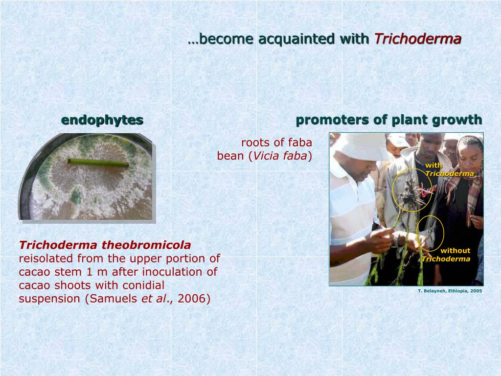 promoters of plant growth