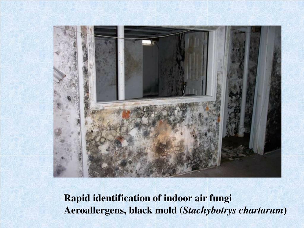 Rapid identification of indoor air fungi