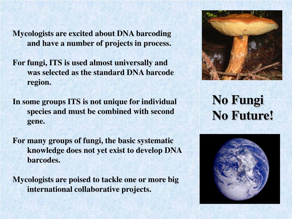 Mycologists are excited about DNA barcoding and have a number of projects in process.