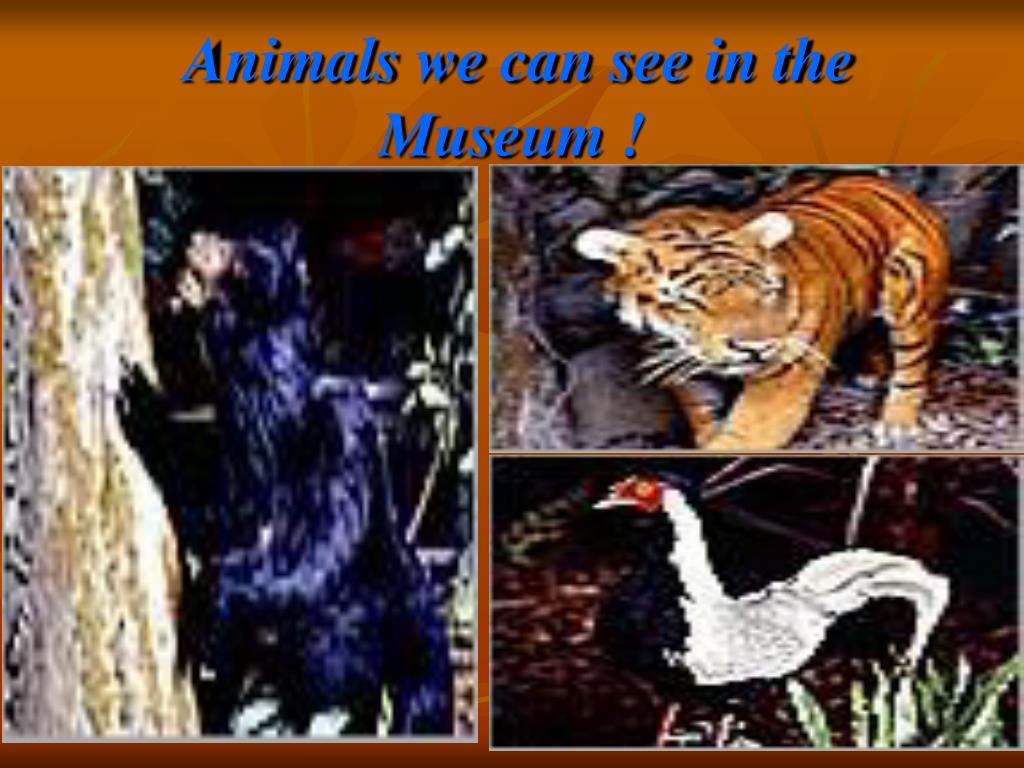 Animals we can see in the Museum !